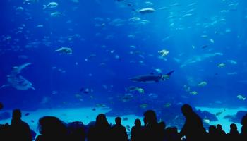 Самый большой в мире аквариум