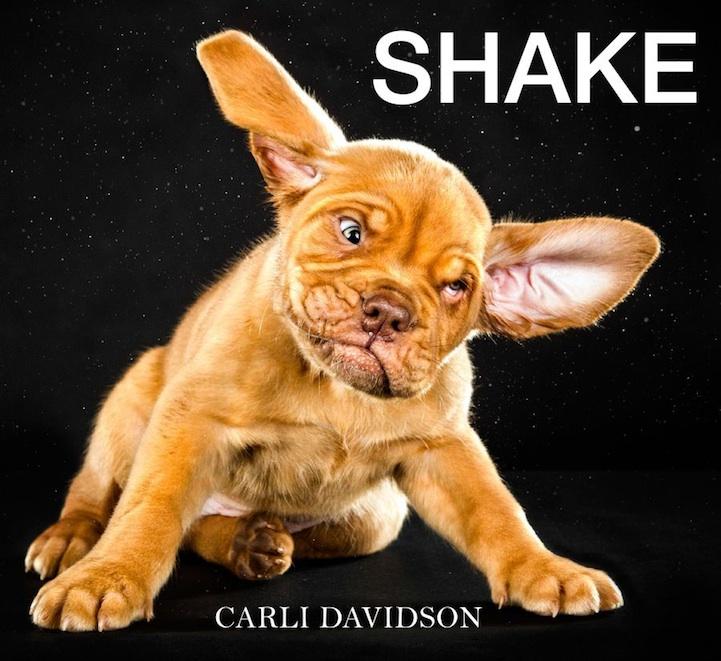 shakecarlidavidson12