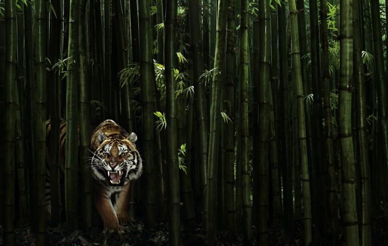 Животные... Фотограф Peter Hebeisen (22 фото - 4.08Mb)