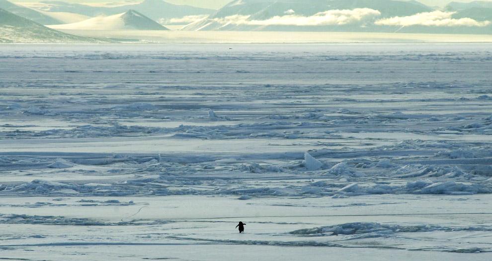 Scenes from Antarctica (32 фото - 4.58Mb)