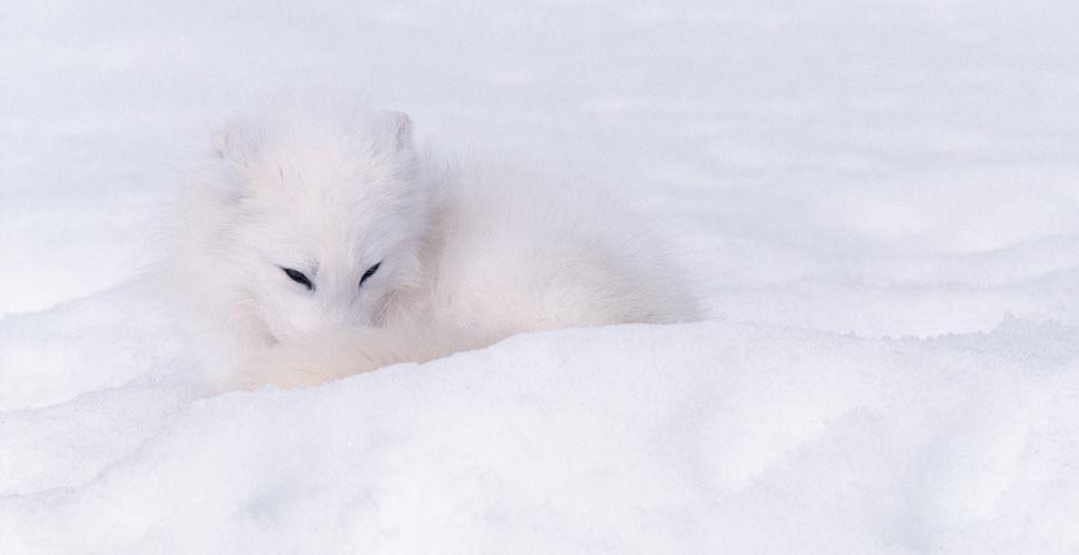 Завораживающие кадры с животными (Camouflage)... Фотограф Art Wolfe (24 фото - 2.48Mb)