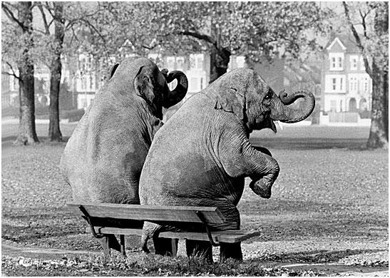 Потрясающие кадры британского фотографа Arthur Steel (75 фото - 4.54Mb)