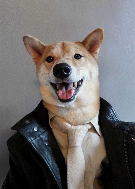 Самый стильный пёс в мире