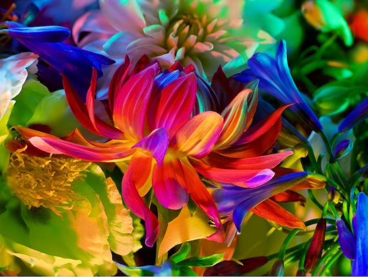 Цветочные натюрморты Торкила Гуднасона