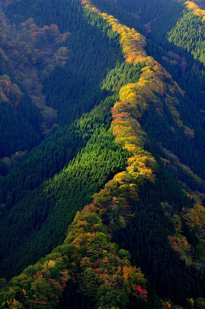2 фотографии дня про леса и деревья