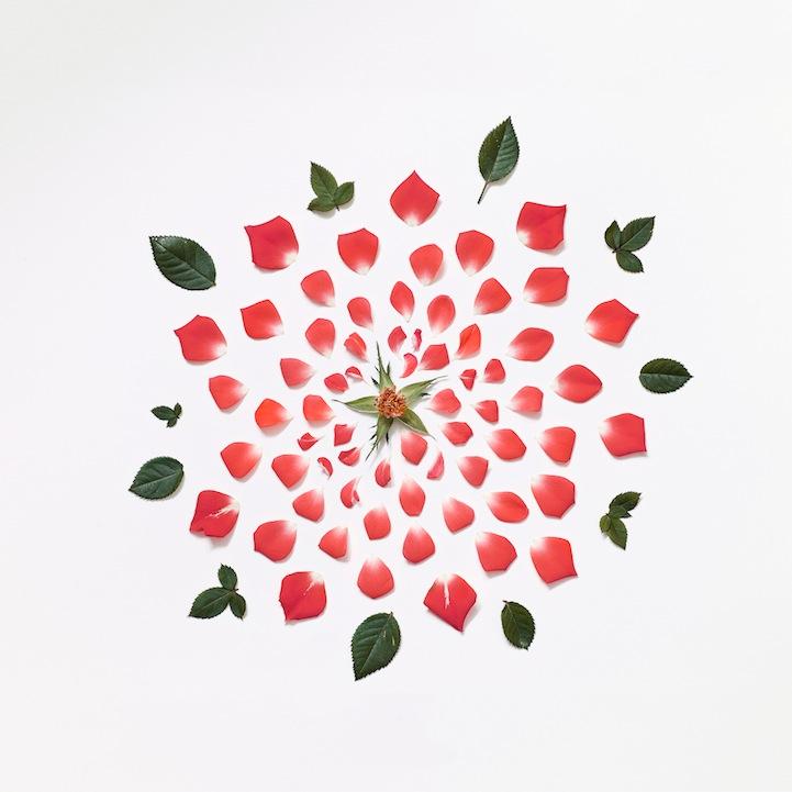 redroseexplodedmuseoportfolioragA3