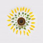 Цветы в деталях
