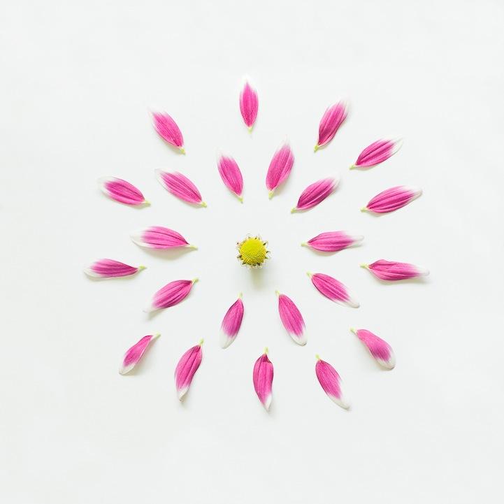 untitledpurpleflowerexplodedportfolioragA3