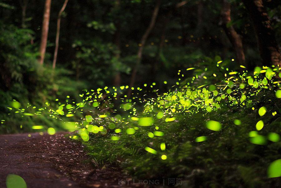 Красивые фото в лесу летом