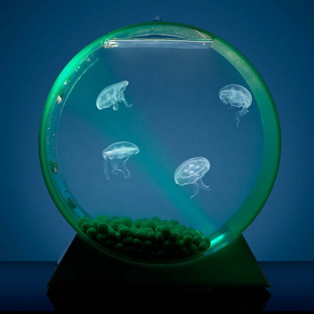 Desktop-Jellyfish-tank-620x620