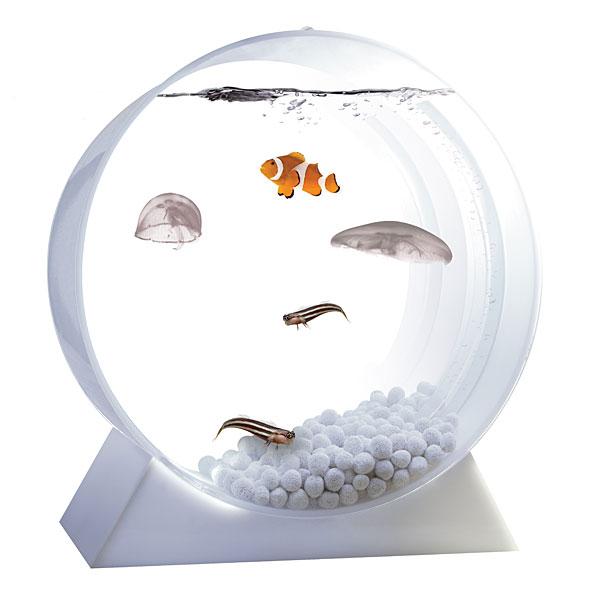 Домашний аквариум с медузами