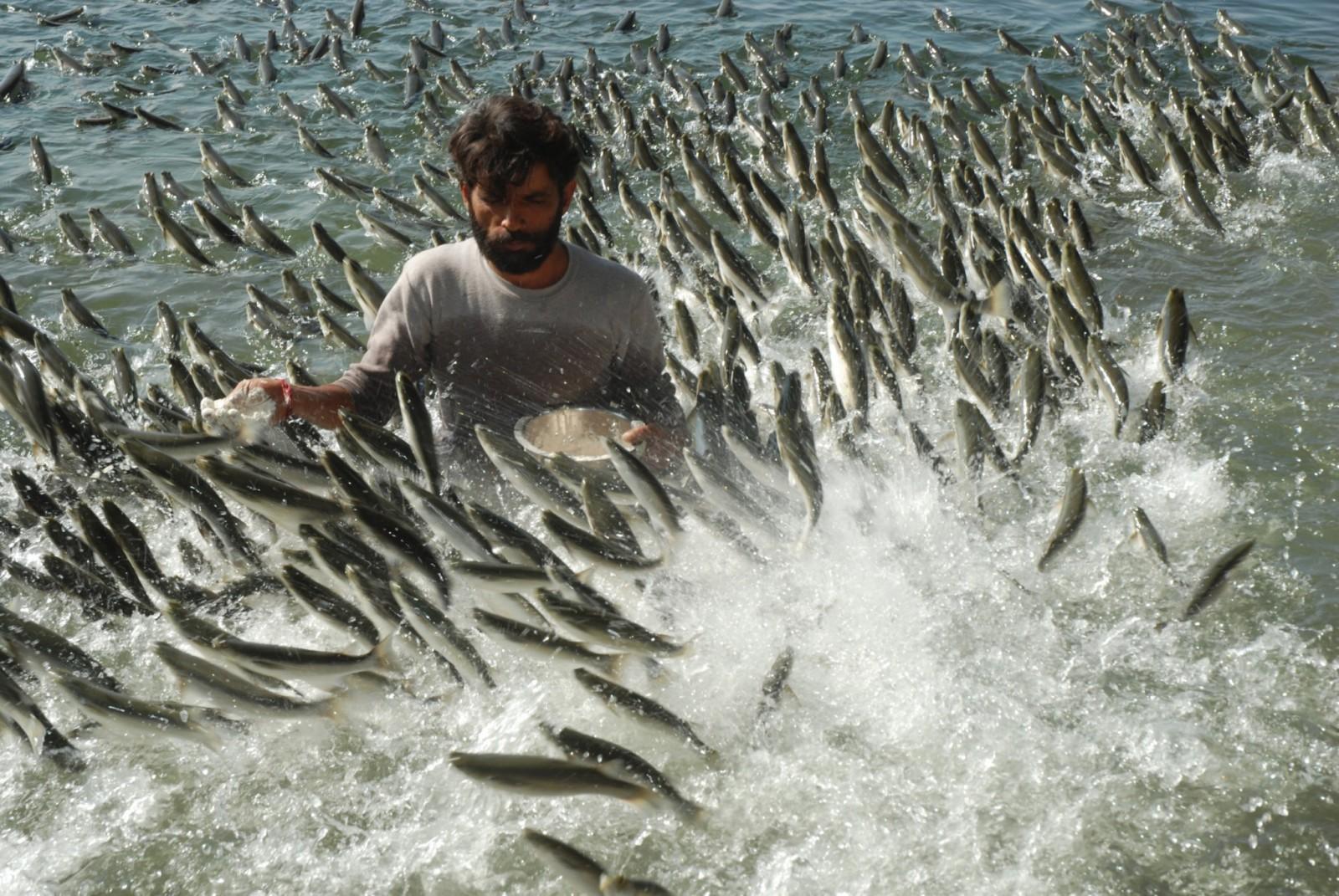 Рыбный пир / Фото дня