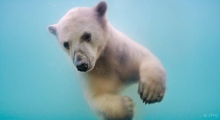 polarbear02