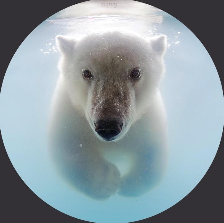 polarbear06