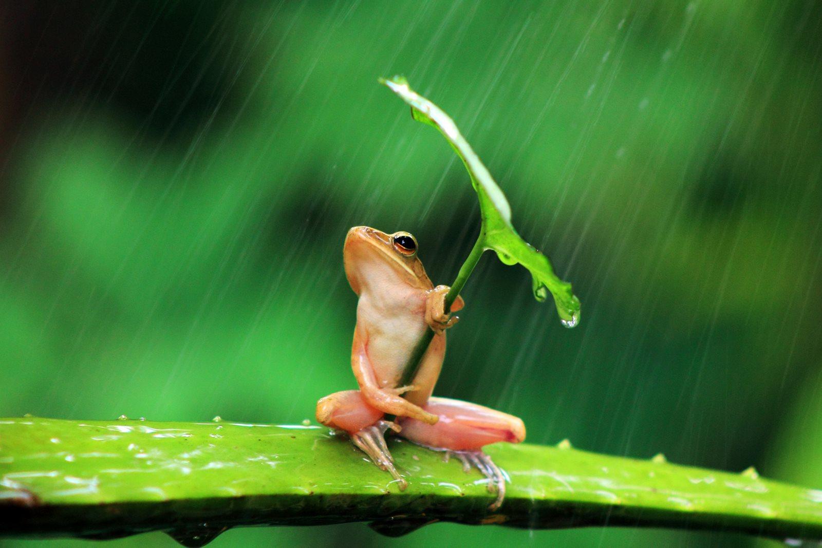 Под зонтиком / Фото дня