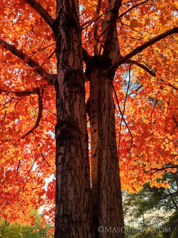 falltrees01