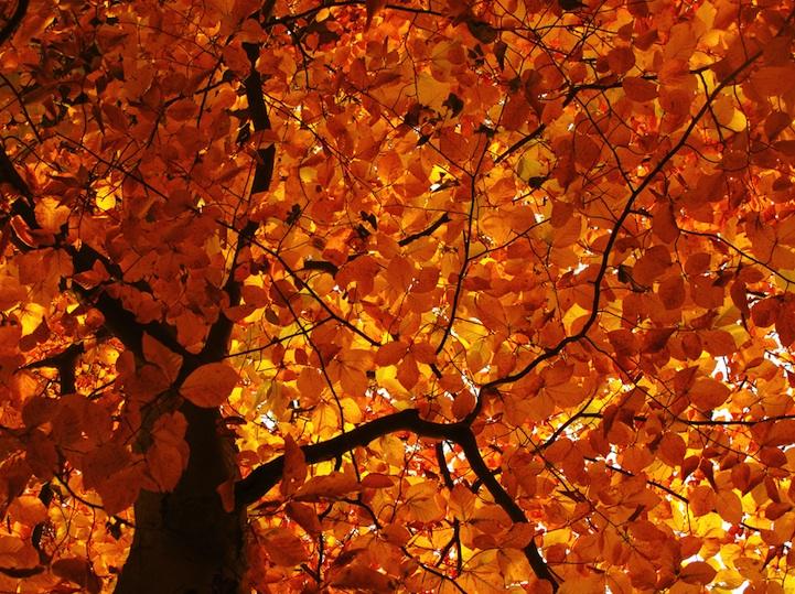 treesfall