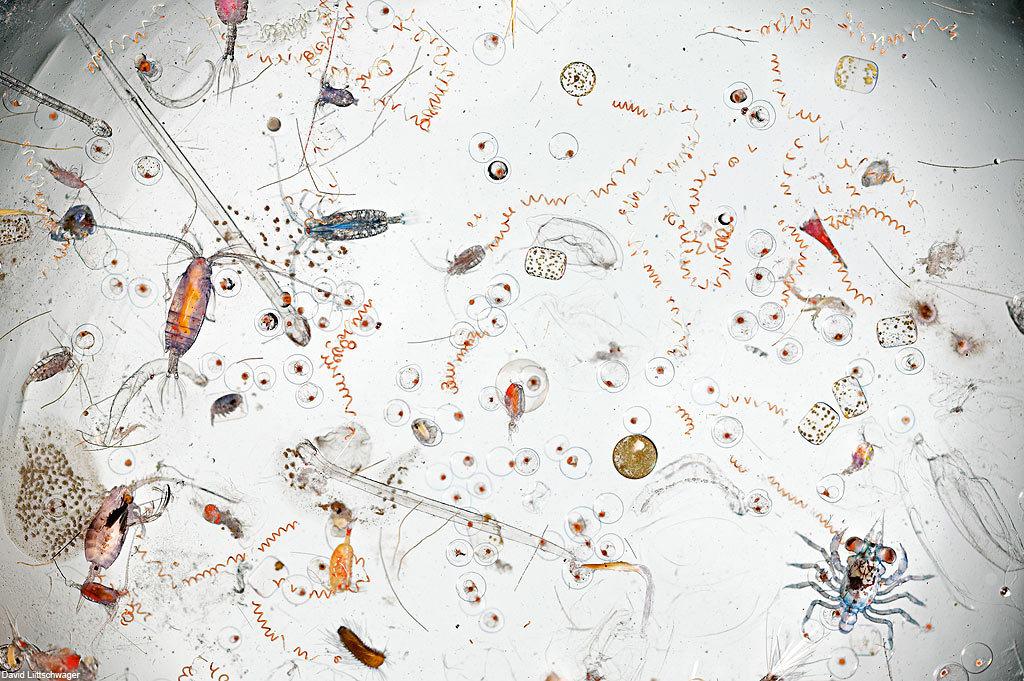 Капля морской воды под микроскопом