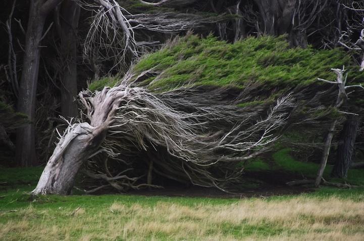windswepttrees02