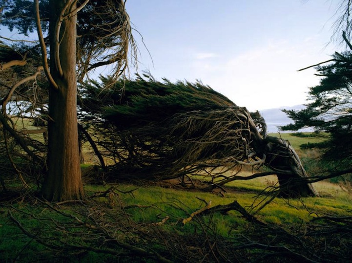 windswepttrees03