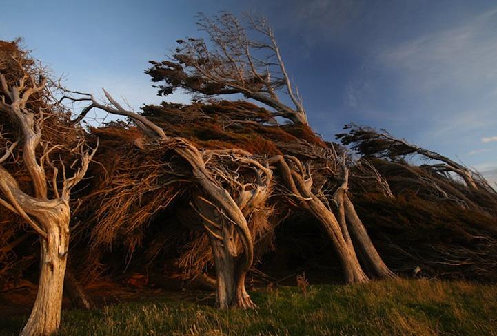 windswepttrees04