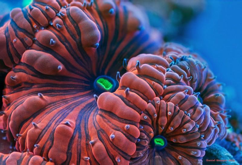Просто неземные макрофотографии кораллов
