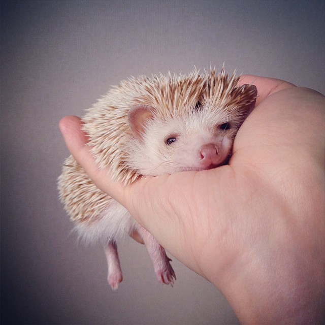 darcytheflyinghedgehog3