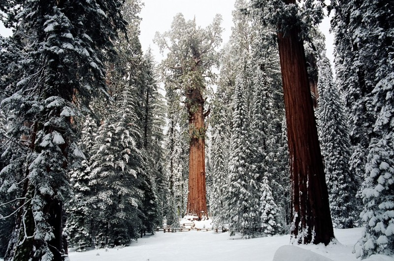 General Sherman in winter