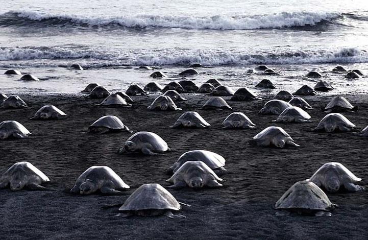 Черепаший берег Коста-Рики
