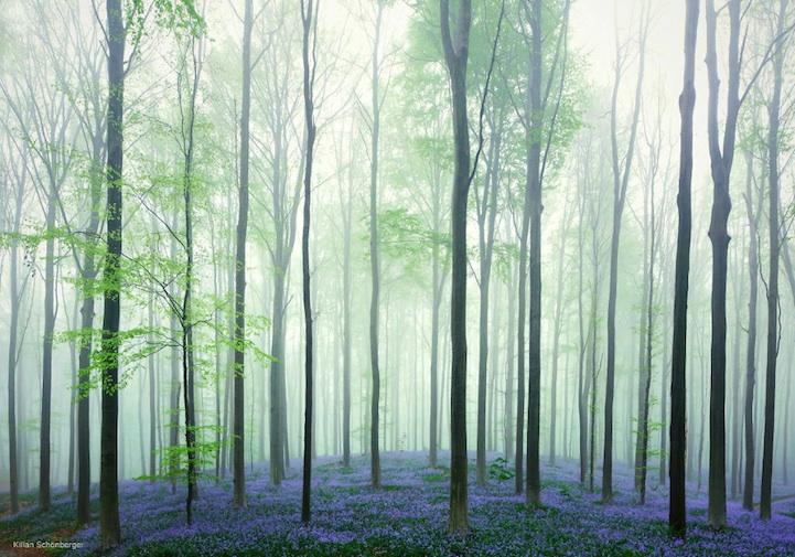 blueforest02
