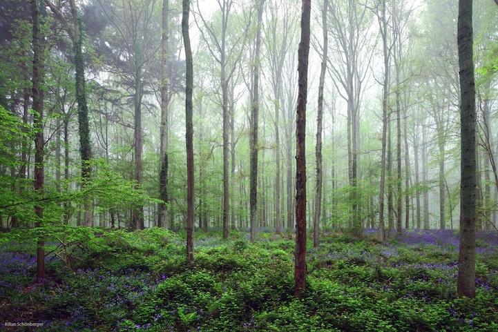 blueforest03