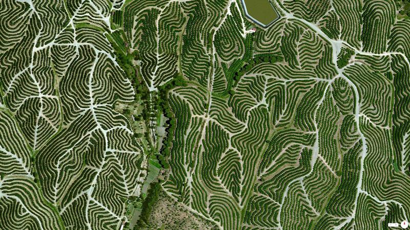 vineyards-in-huelva-spain-from-above-aerial-satellite