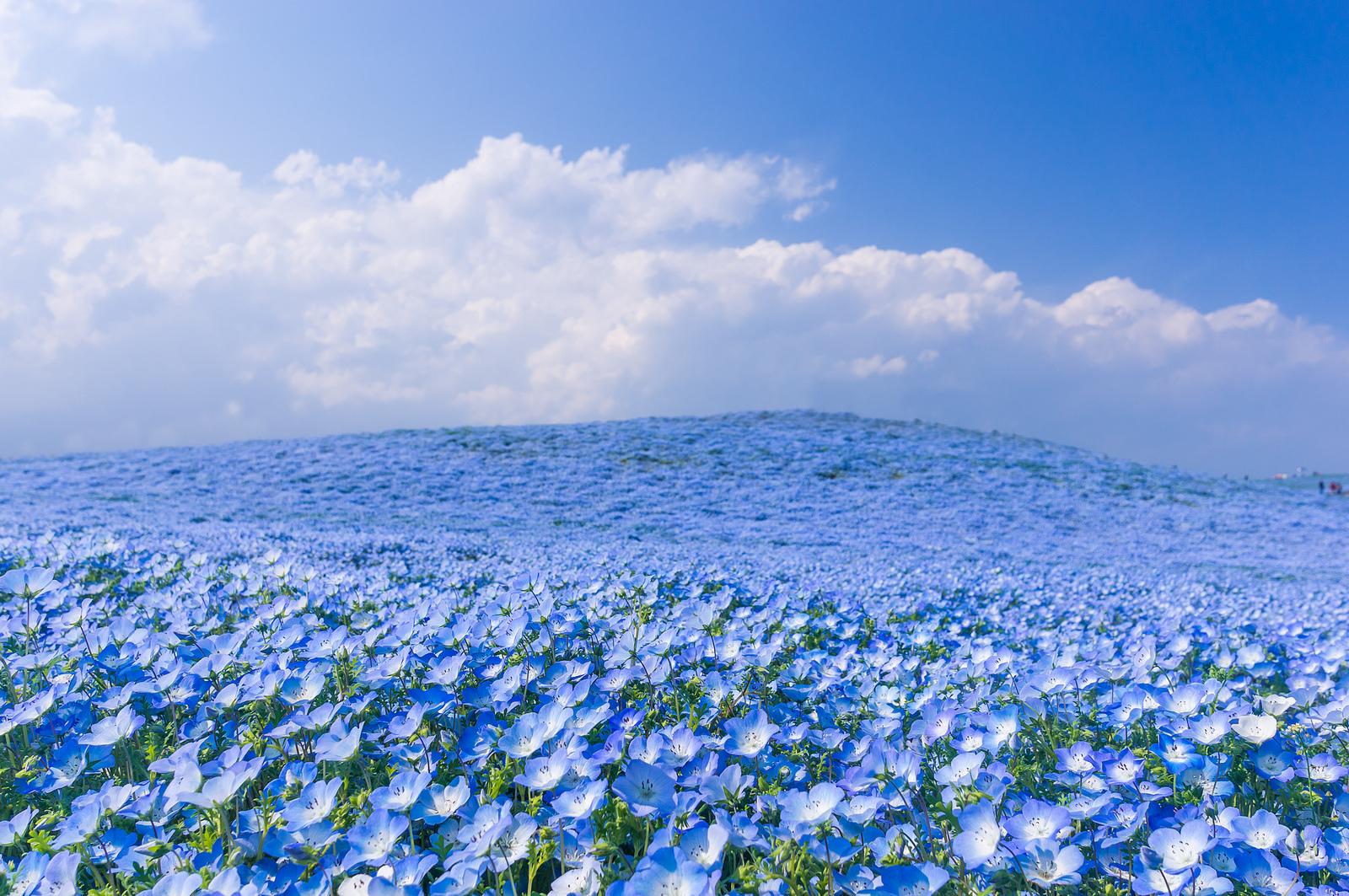И целое море цветов…