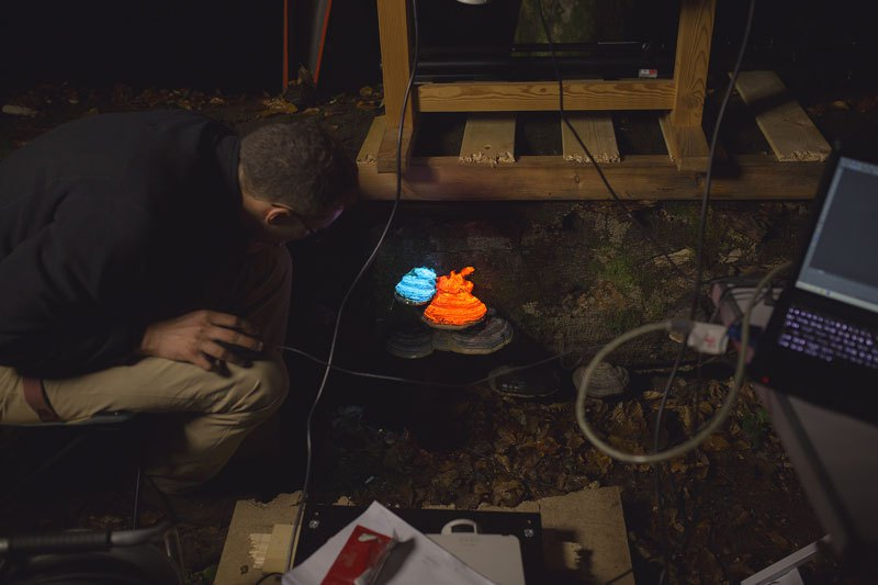 artists-create-a-bioluminescent-forest-with-projectors-2