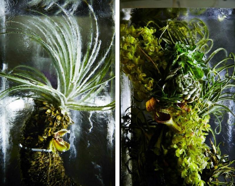 iced-flowers-makoto-azuma-8