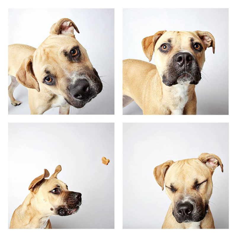 humane-society-of-utah-photo-booth-dog-pics-to-increase-adoption-10