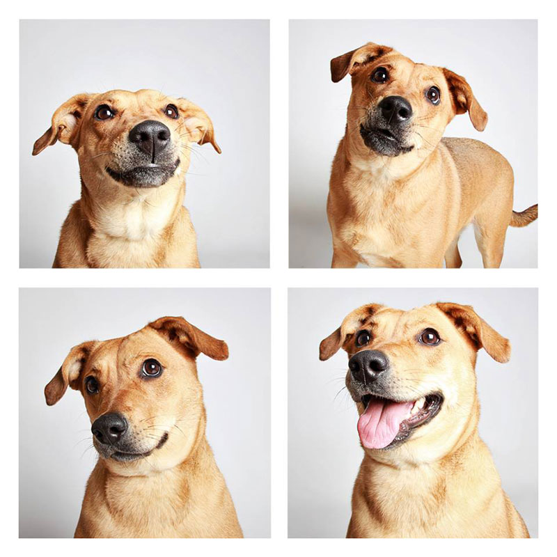 humane-society-of-utah-photo-booth-dog-pics-to-increase-adoption-12