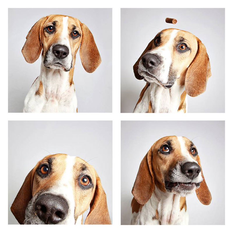 humane-society-of-utah-photo-booth-dog-pics-to-increase-adoption-13