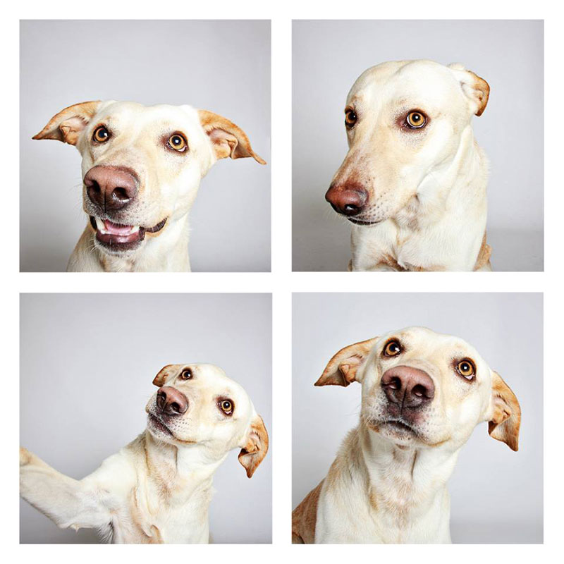 humane-society-of-utah-photo-booth-dog-pics-to-increase-adoption-21