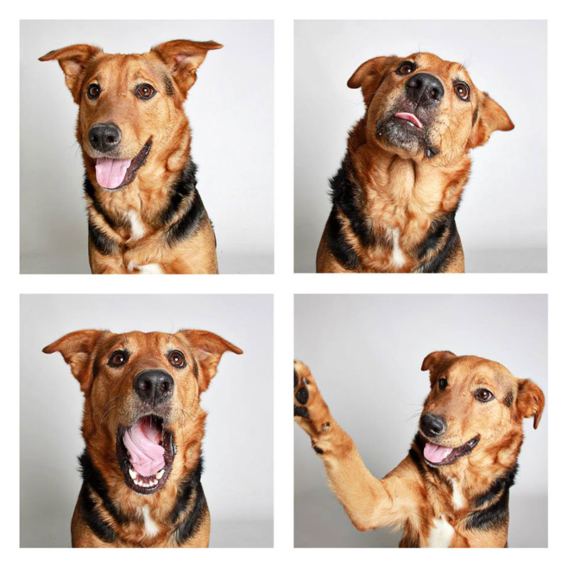 humane-society-of-utah-photo-booth-dog-pics-to-increase-adoption-25