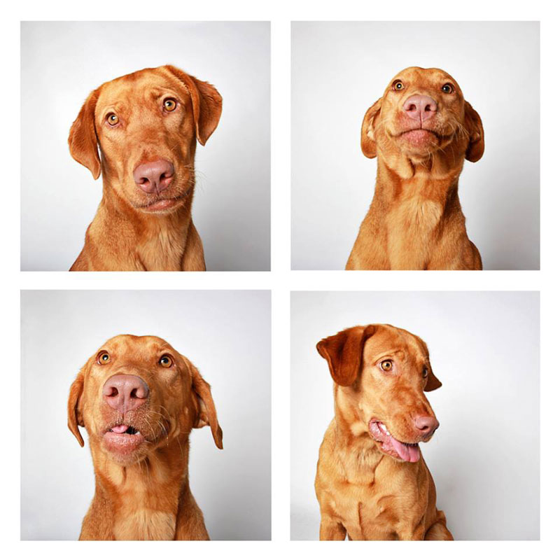 humane-society-of-utah-photo-booth-dog-pics-to-increase-adoption-4