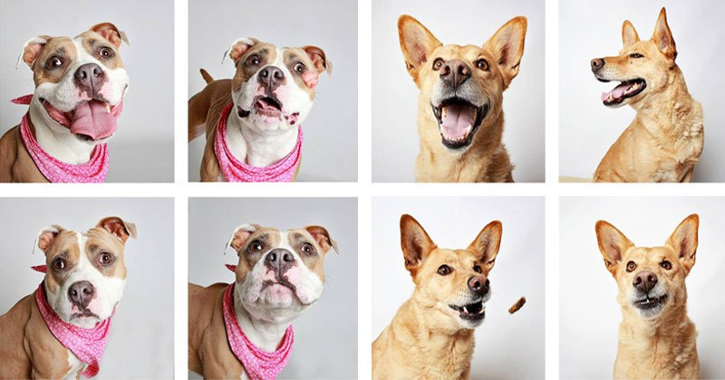 humane-society-of-utah-photo-booth-dog-pics-to-increase-adoption-cover