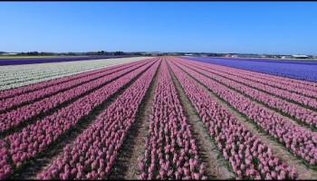 Над цветочными полями