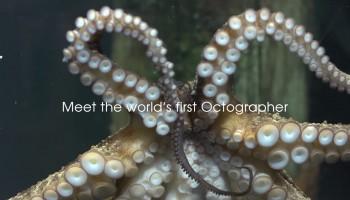 Осьминограф: первый моллюск фотограф