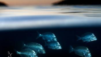 Фотографии над и под морем — «Under/Over»