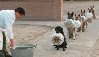 Образцовая дисциплина у собак