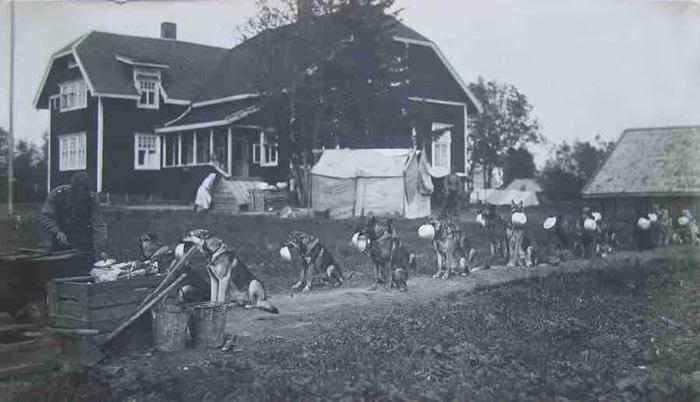 Дисциплина у собак. Финляндия, 1940.