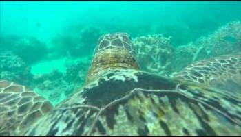 Путешествие по Большому Барьерному Рифу
