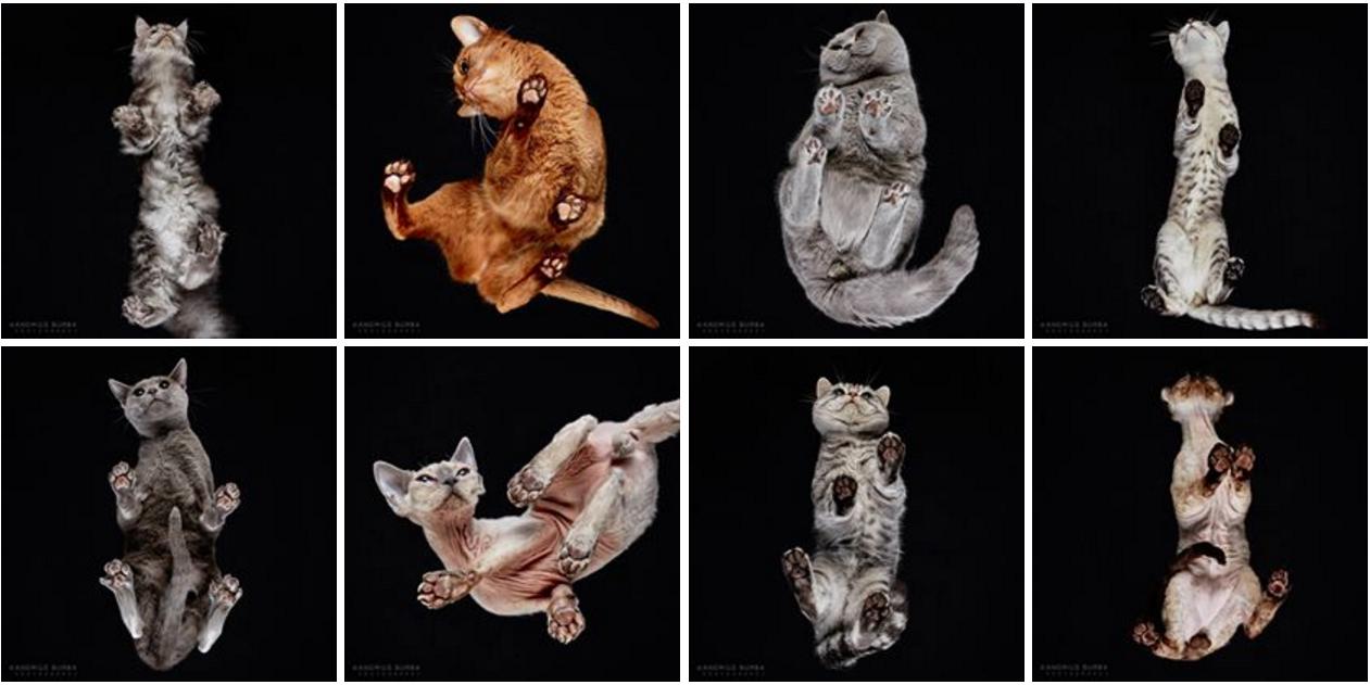 Кошки снизу  или коты на стекле