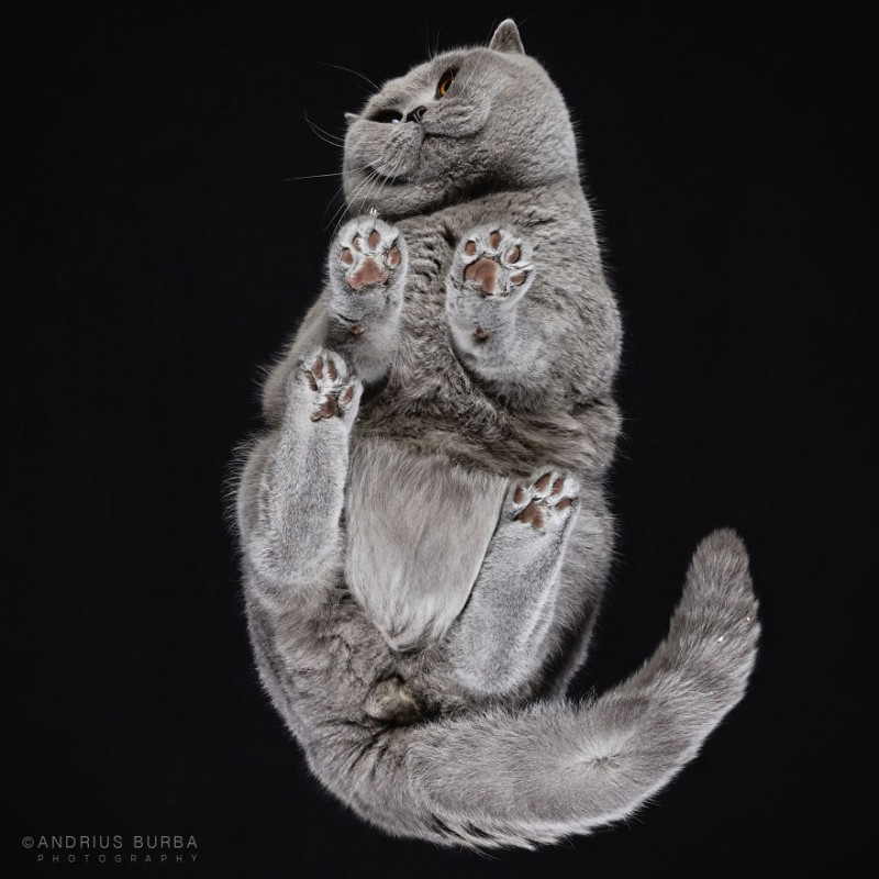 25-photos-of-cats-taken-from-underneath-7__880